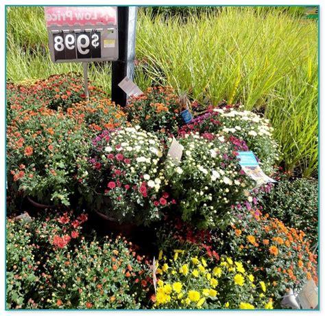 Garden Center Walmart by Garden Rack For Plants