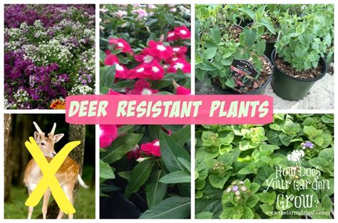 deer resistant plants deer resistant plants the farm girl gabs 174