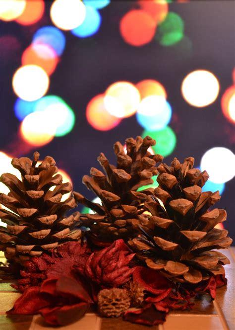 images flower petal red color dessert lighting decor christmas tree christmas