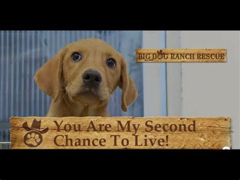 big rescue ranch big ranch rescue west palm fl palm county fl breeds picture