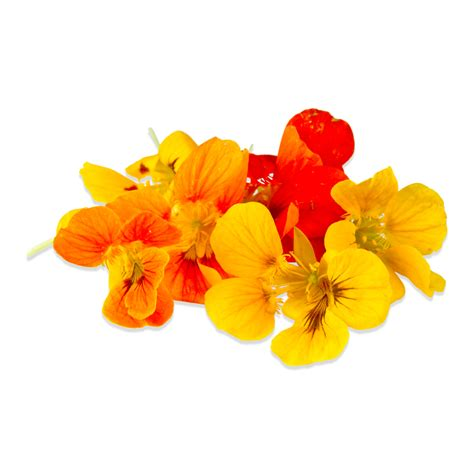 image for flowers edible nasturtium flowers edible nasturtium leaves