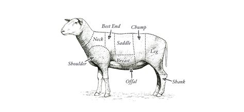 sheep diagram welcome to london s independent butcher