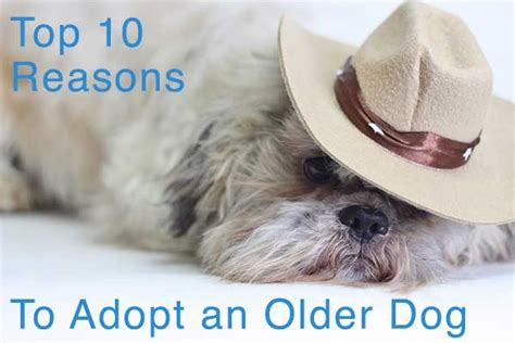 Top 10 Reasons To Adopt A by Top 10 Reasons To Adopt An Central California