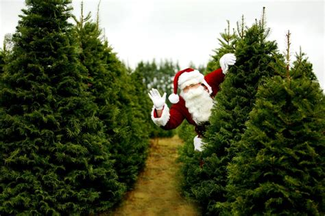 catchy collections of christmas tree farm missouri