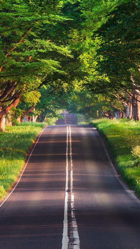 wallpaper road trees summer  nature