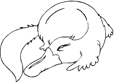 coloring pages australian animals free australian animals coloring pages