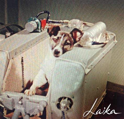 laika the pin laika sputnik 2 summary on