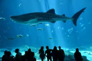 The Aquarium Diving With Whale Sharks In The Aquarium Digital