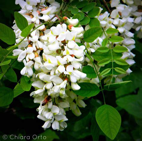 il linguaggio segreto dei fiori il linguaggio segreto dei fiori