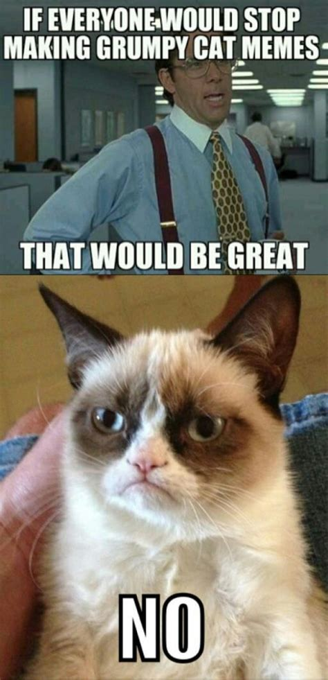 Office Cat Meme - grumpy cat meets office space yessss animals pinterest