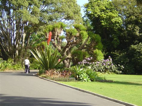 Australia Botanical Gardens Royal Botanical Gardens Australia Wallpaper 537177 Fanpop