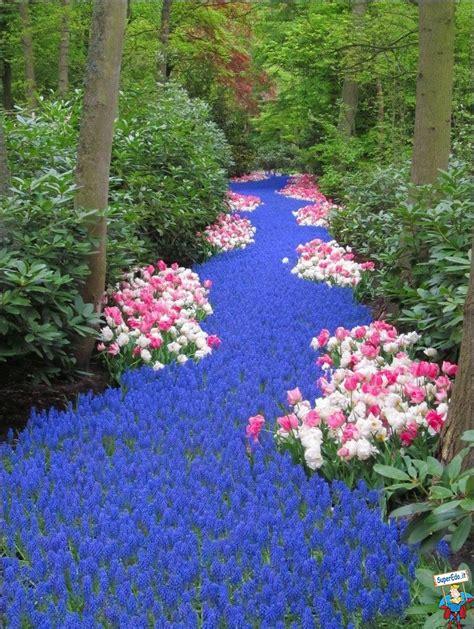 fiori viola immagini sentiero di fiori viola foto di superedo it