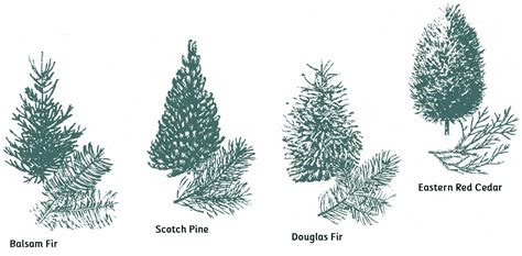 different types of trees decor selecting a christmas tree kstylick latest