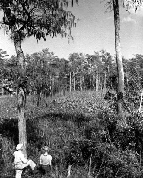 Hendry County Court Records Florida Memory Flaghole Cypress In Hendry County