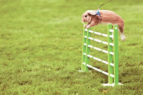 Backyard Rabbit by 2014 Grit Guide To Backyard Rabbits