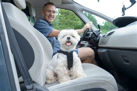 car fans for dogs top 5 best car cooling fans for dogs couture country