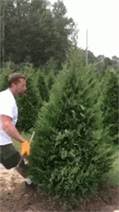 covington christmas tree farm boing boing