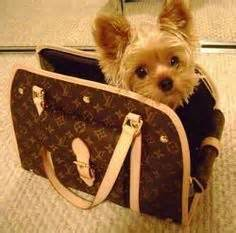 yorkie carriers carriers on carrier pet carriers and backpacks