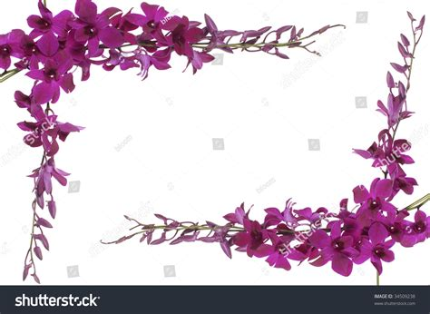 orchideen gestell pink orchids frame stock photo 34509238
