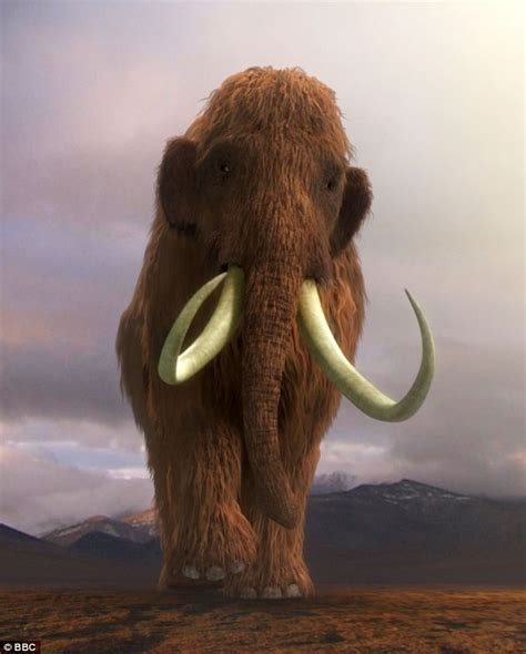 wooly mammoth ice age woolly mammoth secrets from the ice 2012 tv tv