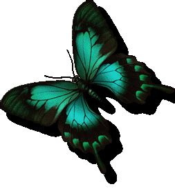 Animation Bundle Butterfly Animation Butterfly Gif Butterfly 3d Animation