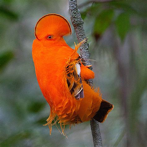 fascinating birds extremely colorful and cool looking birds