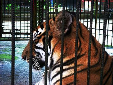 petition animal welfare board  india   prison animals  zoo  small cages  people