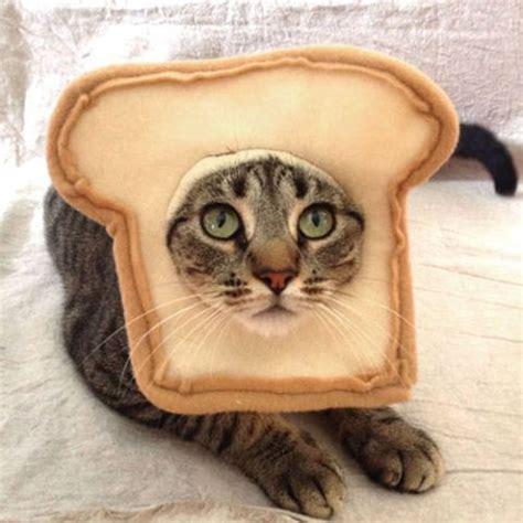 cat costumes   insta followers  love homemade