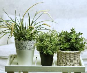 piante da letto piante in da letto fanno