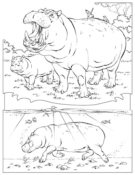 National Geographic Coloring Pages national geographic coloring pages coloring home
