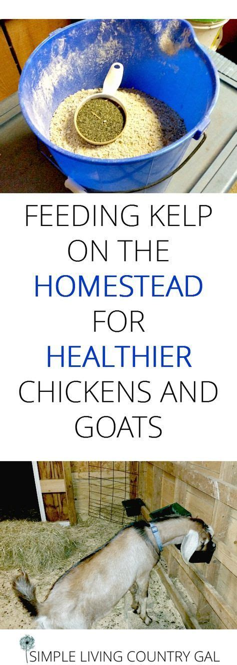 7 of the most liberating benefits of homesteading from desk jockey to survival junkie why you should kelp on your homestead goats goats livestock and homesteading