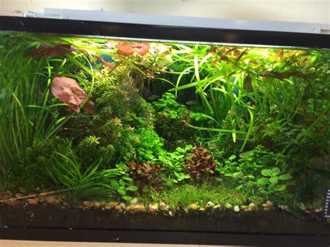 nano planted tank light planted aquarium light aquarium article digest