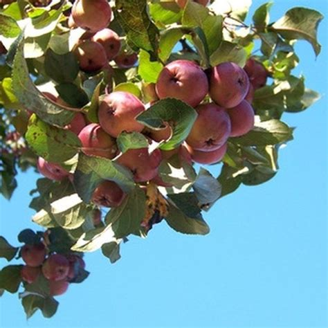 fruit trees for zone 4 25 best ideas about zone 9 gardening on front