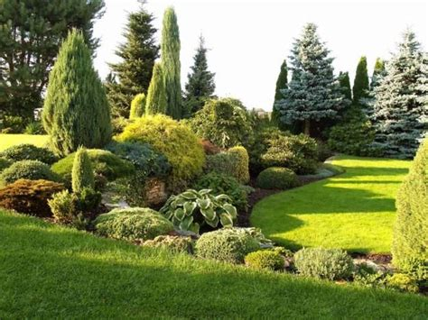 Evergreen Garden by 25 Best Ideas About Evergreen Garden On Blue