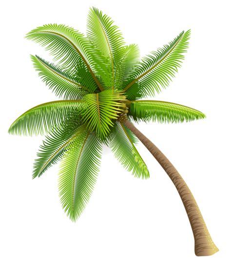 wallpaper pohon kartun 1 gambar pohon kelapa gambar pemandangan