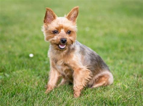 best low maintenance dogs top 32 low maintenance breeds top x best list image 4674002 by