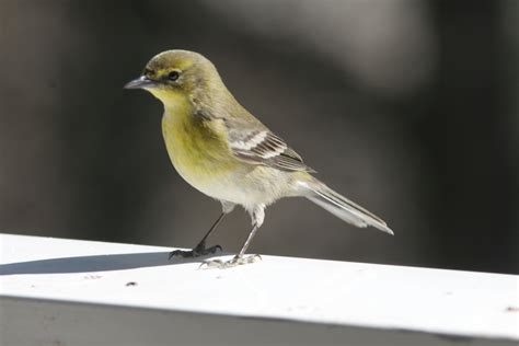 how to scare birds away from patio 100 scare birds away from patio how to deter birds from