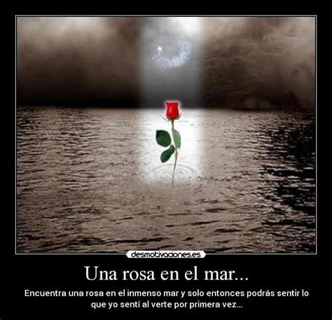 imagenes rosas en el mar una rosa en el mar desmotivaciones