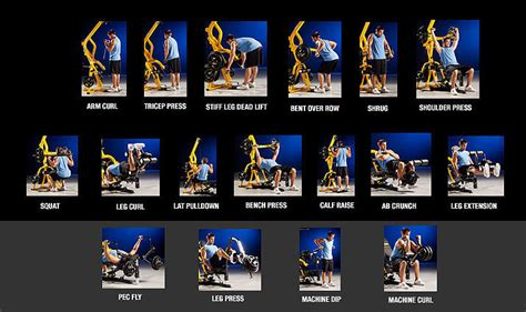 powertec workout bench dumbbellbuddy com powertec workbench levergym