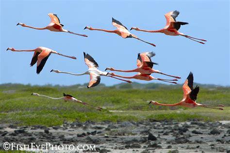 top 28 do flamingos fly flamingo google zoeken moodboard grafische vormgeving fly flamingo