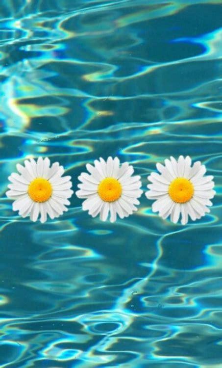 imagenes tumblr margaritas margaritas blancas tumblr