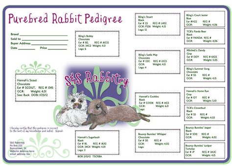 rabbit birth certificate template rabbit pedigrees show rabbit information