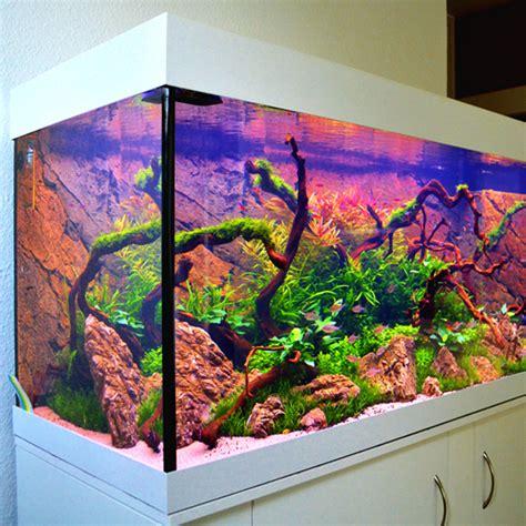 aquarium led beleuchtung selber bauen aquarium selber bauen aquariumsbau filter und