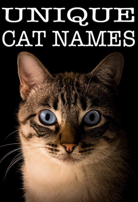 unique cat names 140 unusual names for your new cat