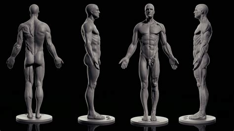 male ecorche human anatomy reference 3d model 3d pixologic zbrush blog 187 zbrushcentral highlights january 4 8