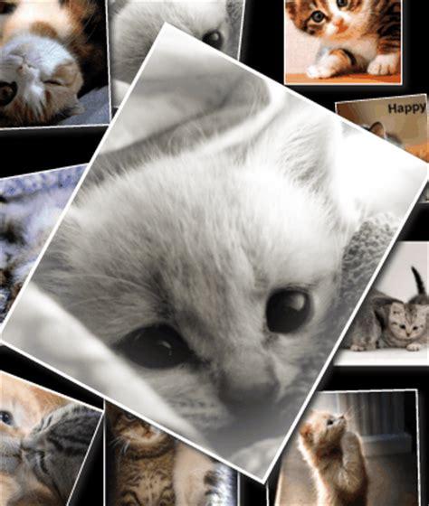 animated  gif cats aninated gifs photo ecards  love  kitty    gif