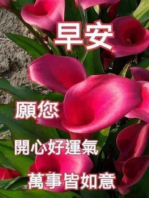 pin    good morning wishes chinese good morning wishes morning greeting good