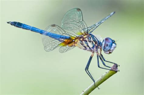 images of dragonflies 7 things you never knew about dragonflies mnn