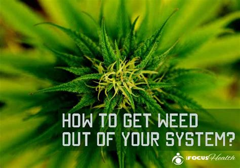 How To Detox Your From Marijuana by Can You Get Marijuana Out Of Your System By Juicing Detox