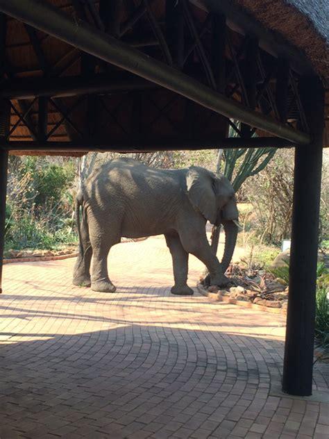 kwazulu natal wedding venues ithala game reserve